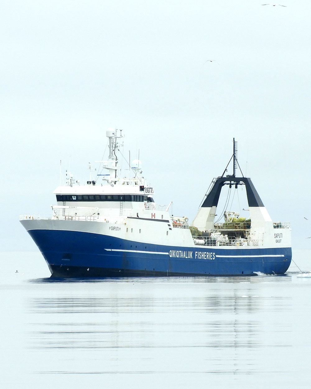 Saputi QFC Partner vessel of Sirena Group