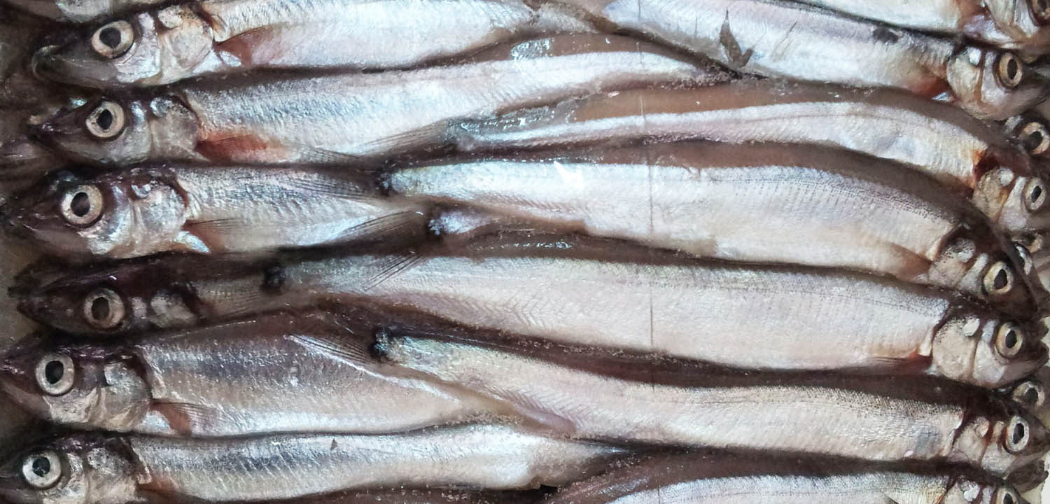 Capelin from Sirena Group