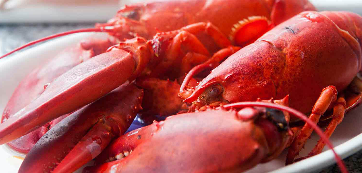 Whitecap Seafoods Lobster, partner of Sirena Group