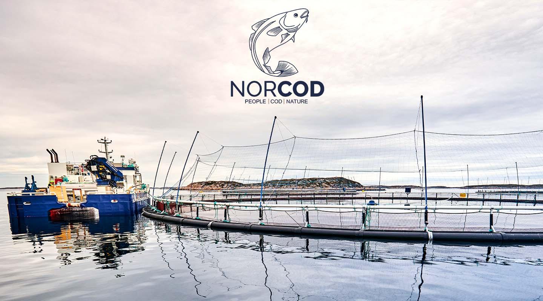 Norcod Sirena